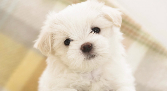 Cachorro-Condomínio